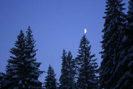 Moon on the tree photo