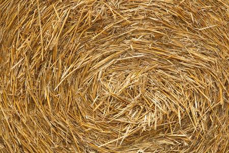 Bale of straw close-up photo
