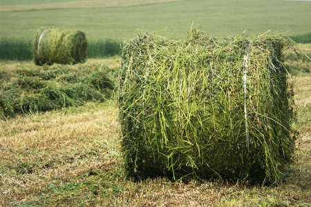 Rural landscape with hay bales Stock Photo - 5109959