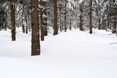 Neige couverts épinettes Banque d'images - 6809519