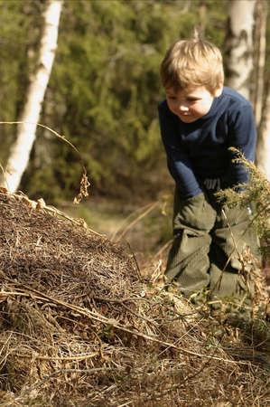 ameisenhaufen: drei-Jahr-alter Junge, der einen Ameise-H�gel betrachtet