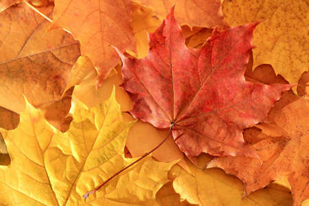 colorful autumn leaves - background close up Stock Photo