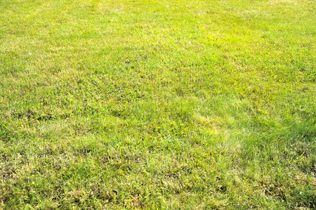 trimmed: background of trimmed grass - lawn Stock Photo