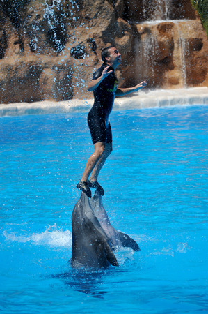fish exhibition: PUERTO DE LA CRUZ, TENERIFE, SPAIN - JULY 5: water shows with dolphins in Loro Park (Loro Parque) on 5 july 2012  Tenerife, Spane. Loro Park one of the most famous amusement parks in Europe, on whose territory with great comfort is the worlds largest c Editorial