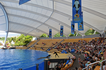 fish exhibition: PUERTO DE LA CRUZ, TENERIFE, SPAIN - JULY 5: water shows with killer whales in Loro Park (Loro Parque) on 5 july 2012  Tenerife, Spane. Loro Park one of the most famous amusement parks in Europe, on whose territory with great comfort is the worlds larg