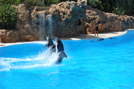 PUERTO DE LA CRUZ, TENERIFE, SPAIN - JULY 5: water shows with killer whales in Loro Park (Loro Parque) on 5 july 2012  Tenerife, Spane. Loro Park one of the most famous amusement parks in Europe, on whose territory with great comfort is the worlds larg