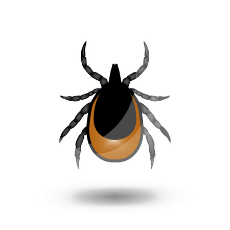 lyme disease: vector image of a tick