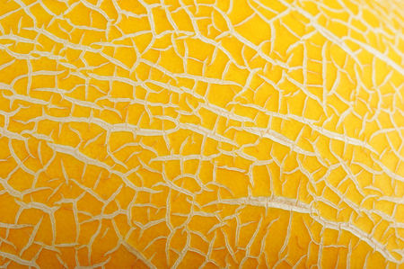 background of  yellow ripe melon
