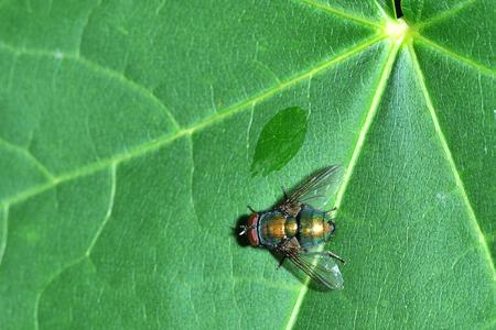fly sitting on green leaf - macro shot Stock Photo