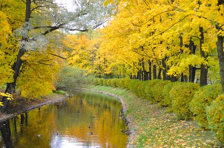 Golden autumn in a park of St. Petersburg, Russia 写真素材