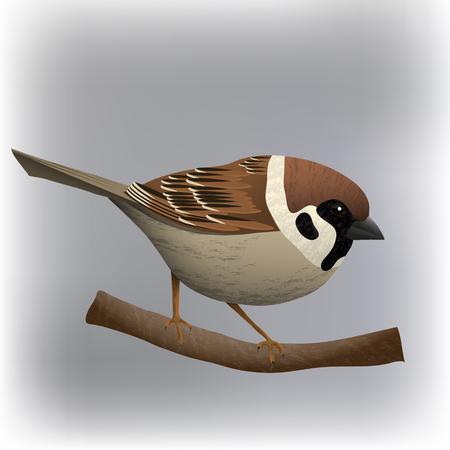 Illustration vectorielle de moineau oiseau