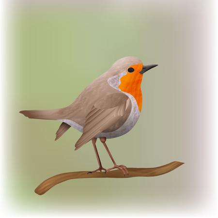 Robin bird vector illustration