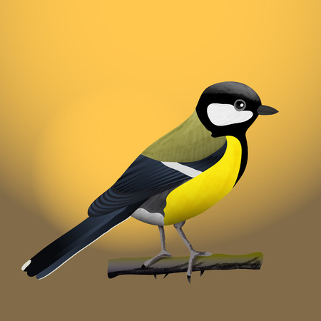 tit bird vector illustration