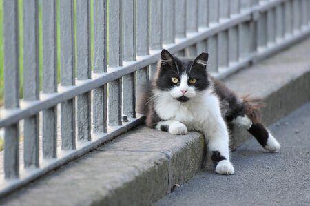 yard cat sitting lying near the fence