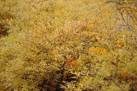 autumn background of autumn leaves Zdjęcie Seryjne