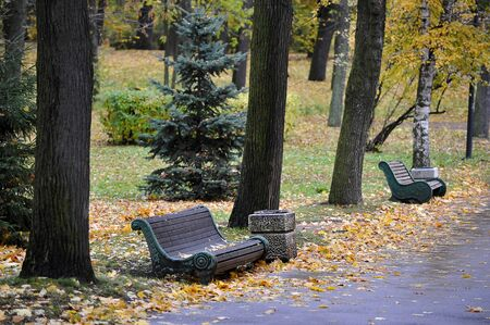 empty benches in autumn Park without people-autumn background of autumn leaves
