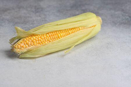 autumn harvest - ear of corn on a gray background