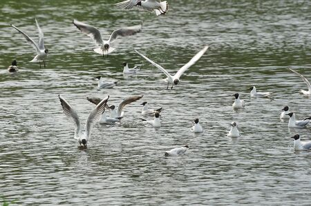 seagulls on the shore of the reservoir