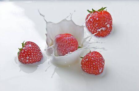Fresh strawberries splashing in milk photo