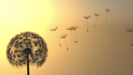 dandelion wind: Detailed dandelion silhouette in orange sunset sky Stock Photo