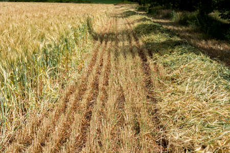 There is a field of grain protection. Agriculture.Ukraine