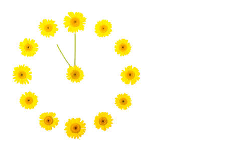 A flower clock made of yellow daisies showing time is eleven o `clock in the afternoon or night. Isolate, copyspace, flatley Reklamní fotografie