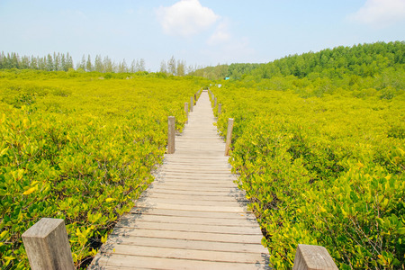 prong: Boardwalk in Tung Prong Thong Golden Mangrove Field, Rayong Thailand