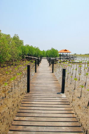 prong: Tung Prong Thong 24 March 2016 : Boardwalk in Tung Prong Thong Golden Mangrove Field Rayong Thailand