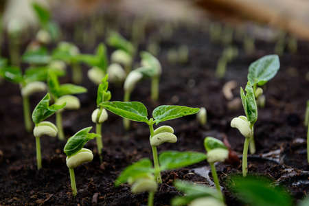 seeding: Agriculture, Seeding, Plant seed growing