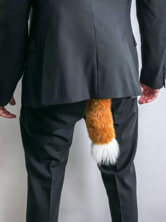 Sneaky businessman in black suit with a fox tail.  Concept for economic / white collar crime, fraud and black market. White background. Stockfoto
