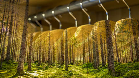 Clothes hanger with dresses in the forest. Concept for organic clothes, closet and sustainable fashion.