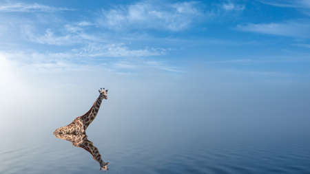 Giraffe taking a bath in lake with peaceful fog. Soft ripples in misty pastel landscape. Montage.