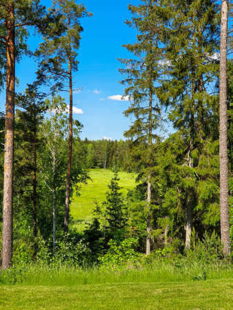 Colorful Swedish summer fields and forest with clear blue sky. Swedish nature in summer.