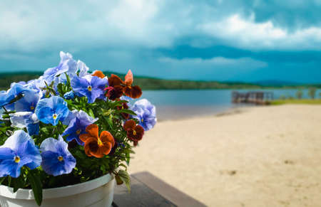 Colorful flowers in a pot with dramatic rainy sky and beautiful beach in the background. copy space
