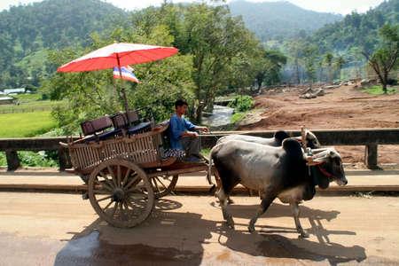 bullock animal: Bullock Cart