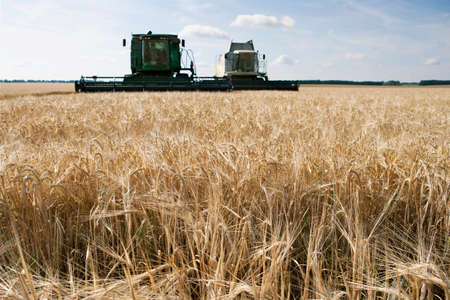 harvesters: Harvesters in the field