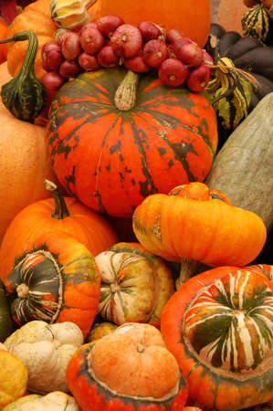 Set of various pumpkins and onions in the market Stock Photo