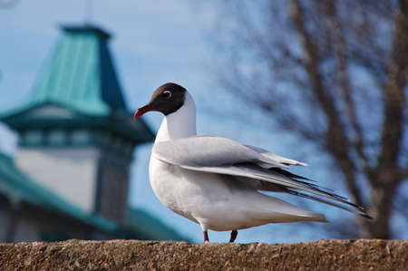 One seagull standing on the stone Stock Photo - 6532568