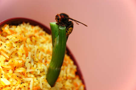 Asian food with wasp