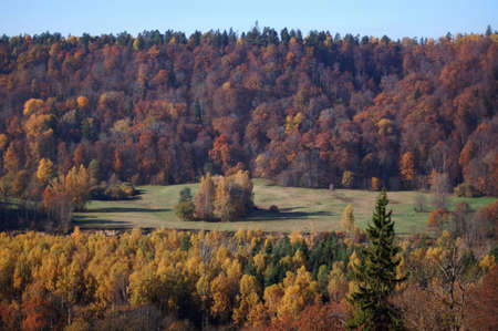 Colourful, autumn trees on a hill slope