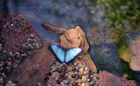butterfly on a stone at a pond Stock Photo