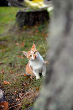 Red kitten sitting on the grass, behind a tree Stock Photo