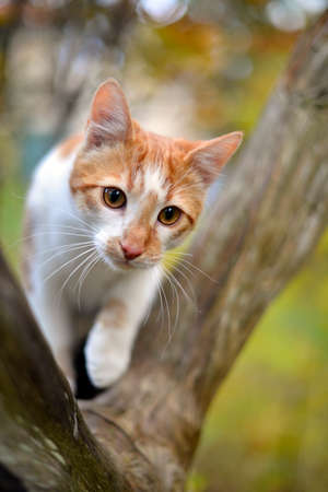 Red cat in the autumn park on a tree Stock Photo