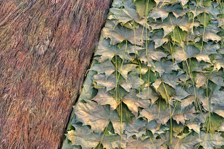 Natural surface of dried plants