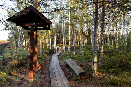 Pedestrian trail made of wood for walks in the forest reserve