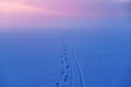 Footprints in the snow from skis and human legs, in bright predawn colors