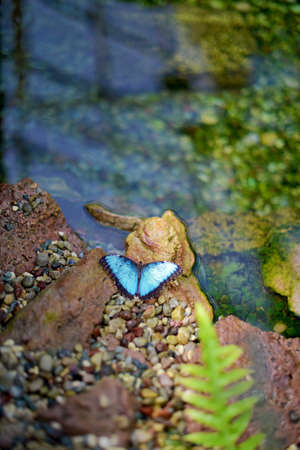 A butterfly of the genus Stock Photo