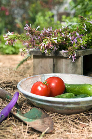 Closeup still life of first red tomatoes and cucumbers of the season in a pretty organic garden Stock Photo
