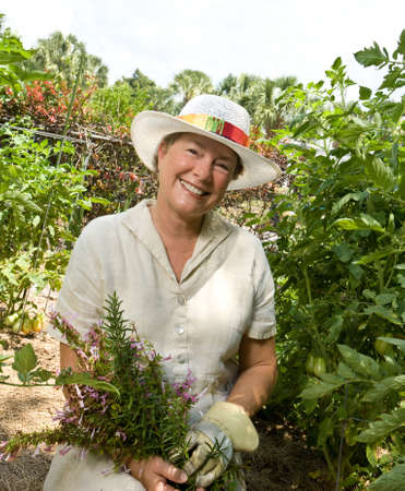 Een volwassen vrouw in haar tuin bedrijf vers geplukte kruiden omgeven door tomatenplanten Stockfoto