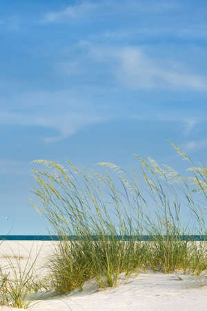 Peaceful scene at the beach with sea oats, white sand and calm seas. Good background shot